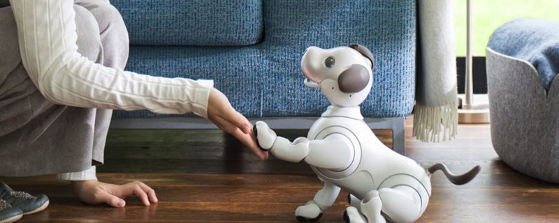 Aibo robot dog