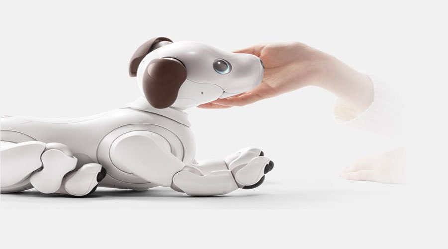 Aibo robot dog gestures