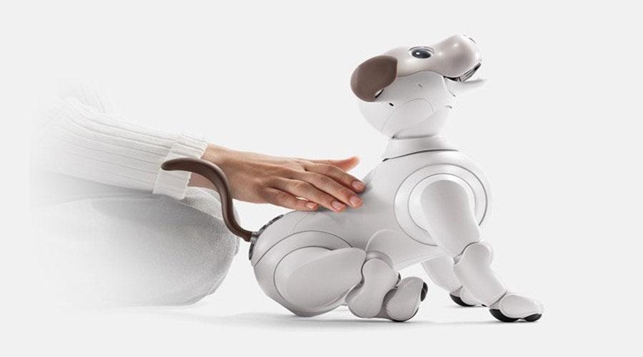 Aibo robot dog touch response
